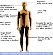 What are the functions of Water in the body?