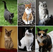 Venta de gatos