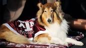 Texas A&M's Mascot