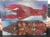 Crayfish Internal Diagram