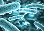 What is Bacteria?