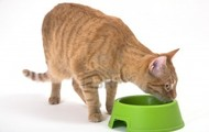 This Tabby cat's health depends on a healthy diet.