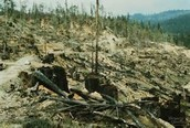 What Causes Deforestation?