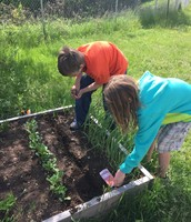 August and Kaylee worked hard planting beets.
