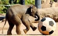 'Bob the Elephant'