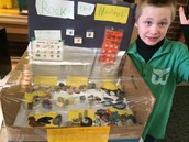 Kaden and his Rock Collection