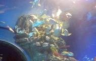 More fish...