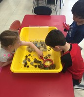 We used magnifying glasses to look at rocks, pinecones, and other natural items.