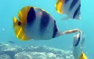 Fishys!