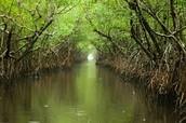 4 ways to survive the Everglades!