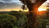 The sun rise or set of the Amazon rain forest