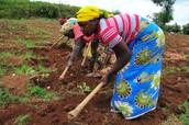 Uganda and its Potential