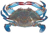 Save the blue crabs