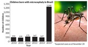 Zika Virus Graph