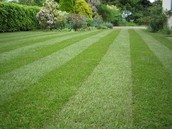 we mow your lawn to a nearly perfect height