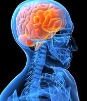 Breakdown of Nerve Cells in the Brain
