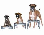 Healty dogs