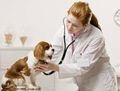 I want to be a vet because its really fun and it takes care of sick animals. Who wouldn't want to be in a job that pays well, is fun, and takes care of animals.