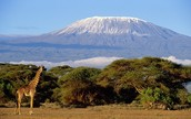 Mount Kilimanjaro and what it can do for you.