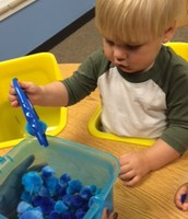 Fine motor practice with blue pom-poms and tweezers.