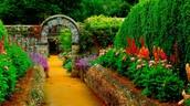 The Garden Scene