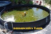 Professional Tips For Significant Problems In Aqua Culture