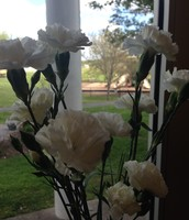 White carnations now, blue tomorrow!