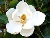 State Flower