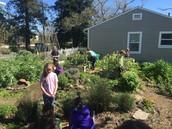 3rd Grade Garden