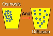 What is osmosis and diffusion?