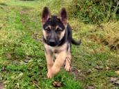 My Puppy Zeus