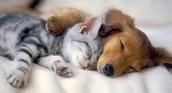 KITTEN AND PUPPIE SLEEPING!!!!