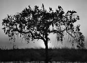 Delta de Okavango [2007]