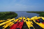 http://ncseagrant.ncsu.edu/coastwatch/previous-issues/2012-2/summer-2012/the-pamlico-sound-fishing-gem-of-north-carolina/