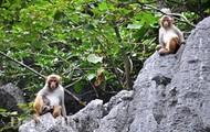 White-tabby Monkeys