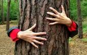 TREE HUGGERS: