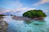Sea Shore Mangrove