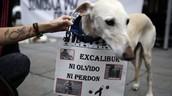 El perro de la paciente con ébola de Dallas no será sacrificado