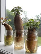 different plants