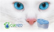 Cat H20