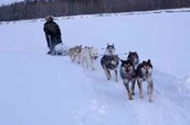 Musher, and Sled Dogs