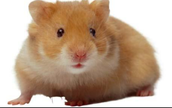 Different Hamsters