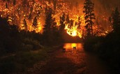 Greenhouse gasses going into the atmosphere through burning trees