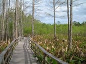 Everglades Natiol Park
