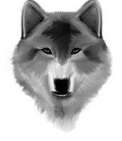 Crispin was declared a wolf head
