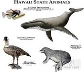 Hawaii state animals