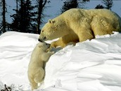 2. How is it born? How does the mother care for its young?