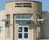 What you should know about Collin County
