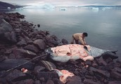 Reasons for Endangerment & Critical Information