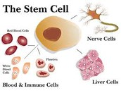 Parts of a Stem Cell